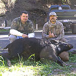 Wild Pig Guided Hunts
